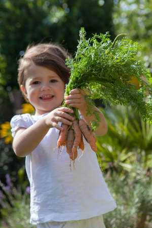 Toddler girl holding freshly picked carrots from the garden, selective focus