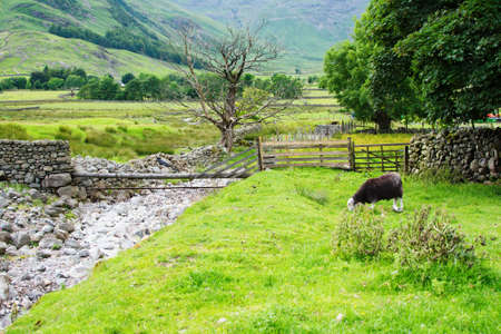 cumbria: Beautiful views, stone walls, stream, mountains on the background, black sheep in the fields, selective focus