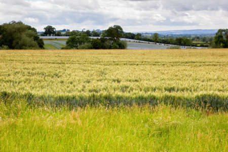 oxfordshire: Rural views in Oxfordshire, England, barley fields, blue linseed farm on the background, selective focus