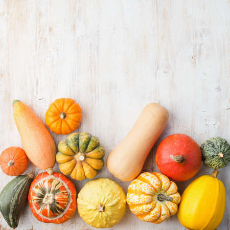 Assortment of pumpkins and gourds on the white wooden table background, top view, copy space for text, square, selective focus Stock Photo