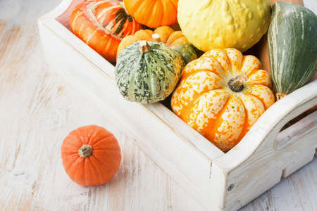 Assortment of pumpkins and gourds in a tray on the white wooden table background, square, selective focus Stock Photo