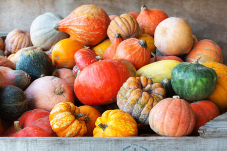 Wooden box filled with different varieties of gourds, farm produce, selective focus