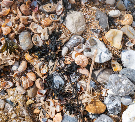Nature seafront background, view of the seaweed, seashells, stones, selective focus