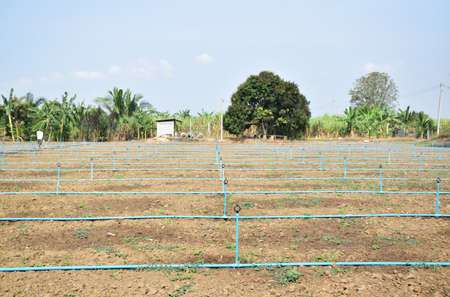 Orchard, farming agriculture with irrigation system
