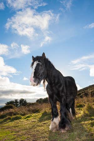backlighting: Beautiful horse backlighting