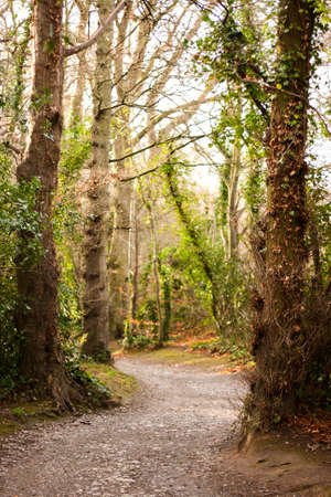 Winding Path through Forest photo