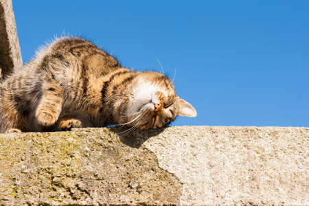 Sweet cat on the wall with sky in the background photo