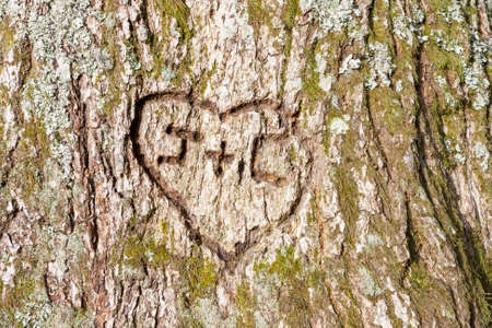 close-up of a heart carved on a tree photo