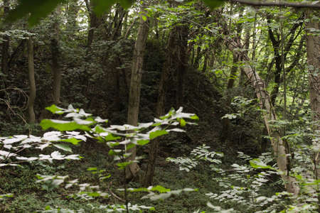 Curved tree falling over understory and unfocused plant on the left