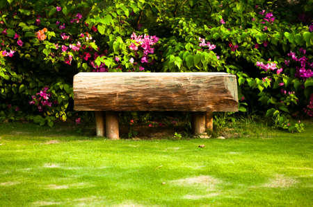 rosebush: Little wooden bench near rose rosebush Stock Photo