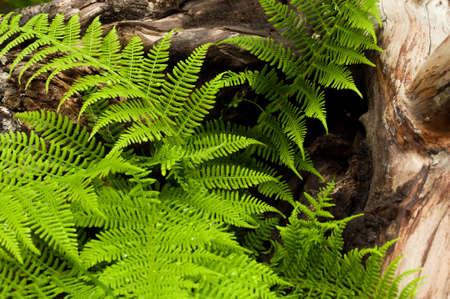 snag: Snag and ferns with rain drops closeup view