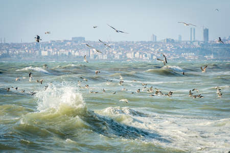 the marmara: Seagulls over Sea of Marmara on a windy and stormy day Stock Photo