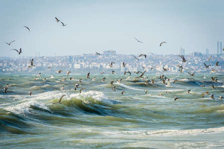 Seagulls over Sea of Marmara on a windy and stormy day Stock Photo