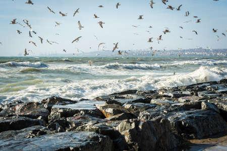 windy day: Seagulls over Sea of Marmara in windy day Stock Photo