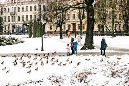 riga: Riga, Latvia - February 20, 2016: People are feeding ducks in park of Riga downtown in Latvia