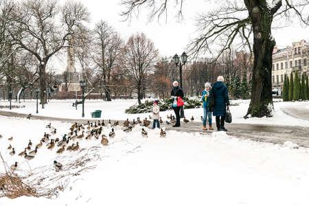 Riga, Latvia - February 20, 2016: People are feeding ducks in park of Riga downtown in Latvia