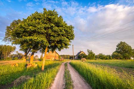 farmhouse: Latvian farmhouse at sunset. Rural landscape.