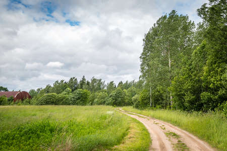 windy day: Latvian birch grove in a windy day