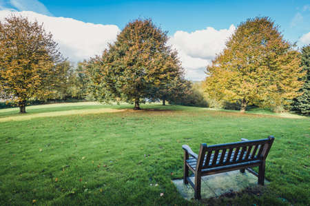 Trees and bench  in the park in fall Stock Photo