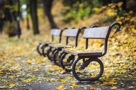 Bench in the park and yellow autumn leaves. Fall scenary.