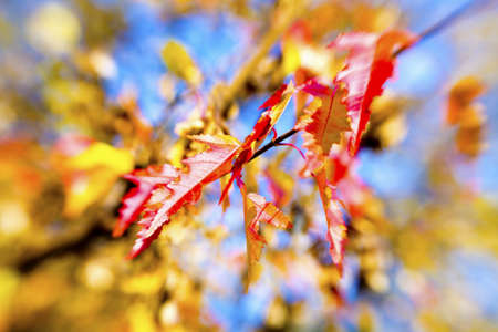 Colorful autumn leaves background  Picture made with special lens