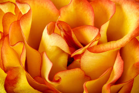 Beautiful orange petals texture background