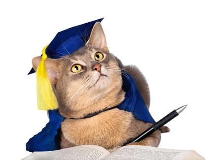 Gato abisinio en graduación de la tapa y vestido con la pluma y el libro aislado en blanco Foto de archivo