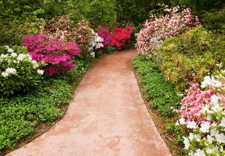 Walkway through flower garden