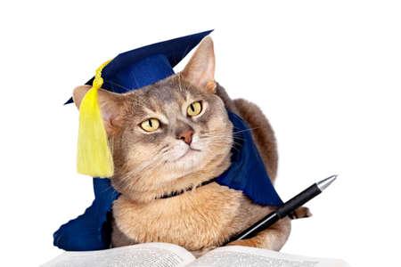 Gato abisinio en graduación de la tapa y vestido aislado en blanco