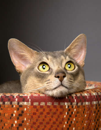 Cat sitting in a pet bed Stock Photo