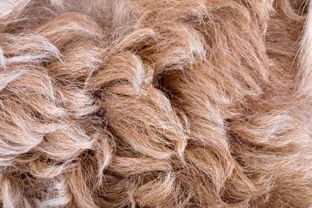 Brown sheepskin texture photo