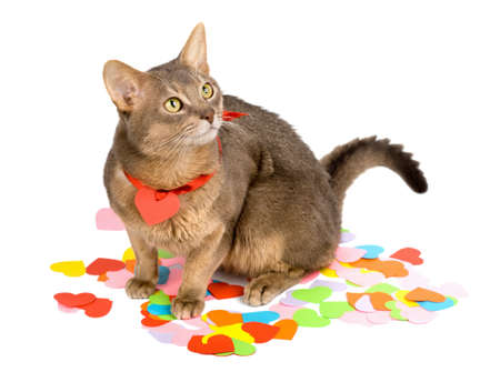 Cat sitting on multicolored paper hearts, isolated on white photo