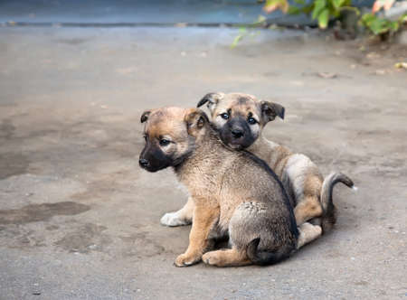 Two homeless sad puppies in the street Stock Photo