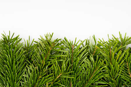 Christmas fir tree branches border. Decorative holiday design element. Stock Photo