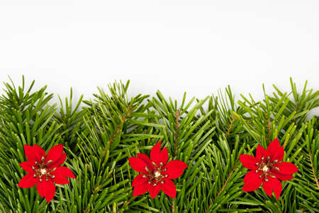 Christmas fir tree branches border with red flowers. Decorative holiday design element.