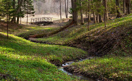 Woodland scenery with tortuous stream, sun rays and small wooden bridge 版權商用圖片 - 103022278