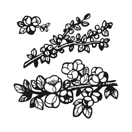 A set of hand-drawn cherry blossom branches  イラスト・ベクター素材