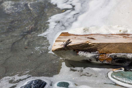 insect on a wooden log on the bank of a stream, Altai, Russia