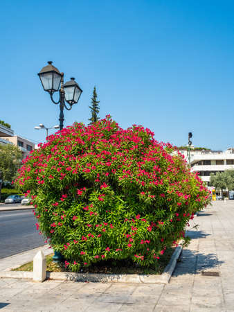 Lush bush with beautiful red flowers and a lantern on the street in Athens, Greece Stock Photo