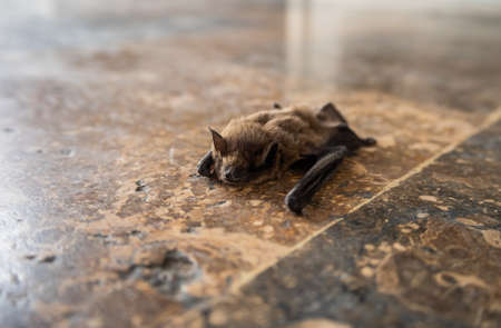 A bat crawling on the marble floor of a shopping center, Greece
