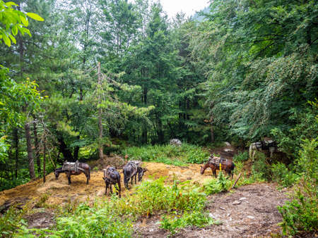 Pack mules at the edge of the forest waiting for loading on the way for an exciting challenging walk while climbing Mount Olympus in Greece