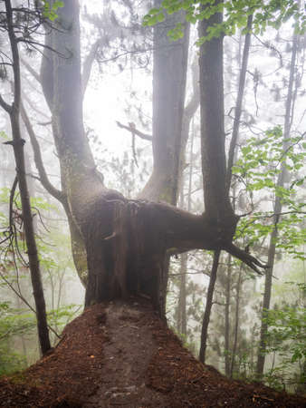 Tree chair in the fog on the way for an exciting challenging walk while climbing Mount Olympus in Greece