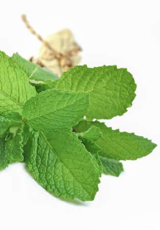 herba: Bunch of fresh mint Stock Photo