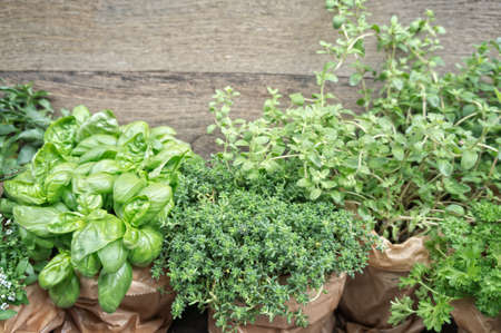 herb garden: Herbs in plant pots with copy space