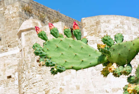prickly flowers: Prickly pears flowers and fruits on blue Mediterranean sky Stock Photo