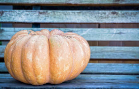 Whole pumpkin with copy space