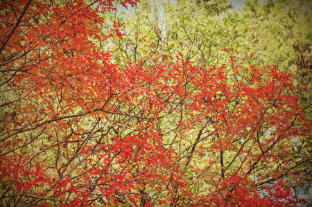 Autumn leaves with copy space Stock Photo