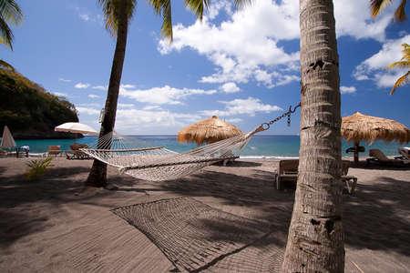 saint lucia: Tropical Hammock