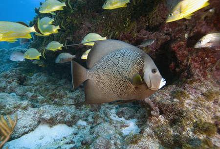 Underwater anglefish