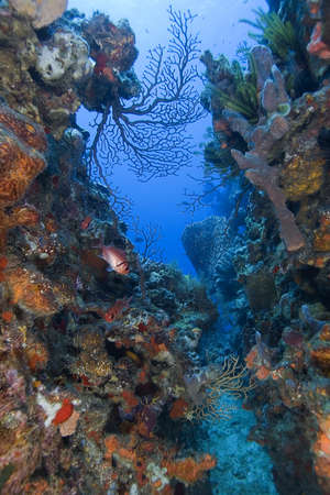 st lucia: Tropical underwater reef